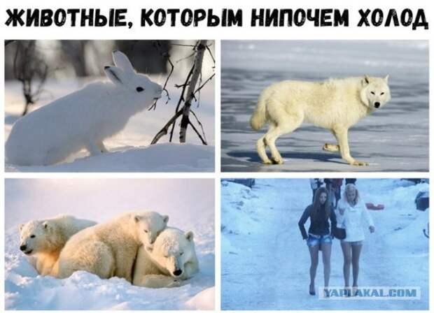 Предновогодняя (зимняя) подборка картинок и приколов