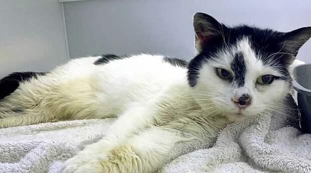 Хозяйка была уверена, что кошки давно нет в живых, а сбежавшая мурлыка 11 лет голодала и бродила по улицам