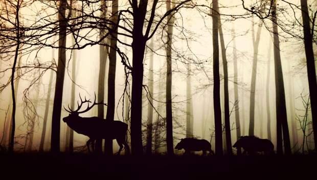В Крыму дикие животные стали чаще подходить  к людям. Названы причины
