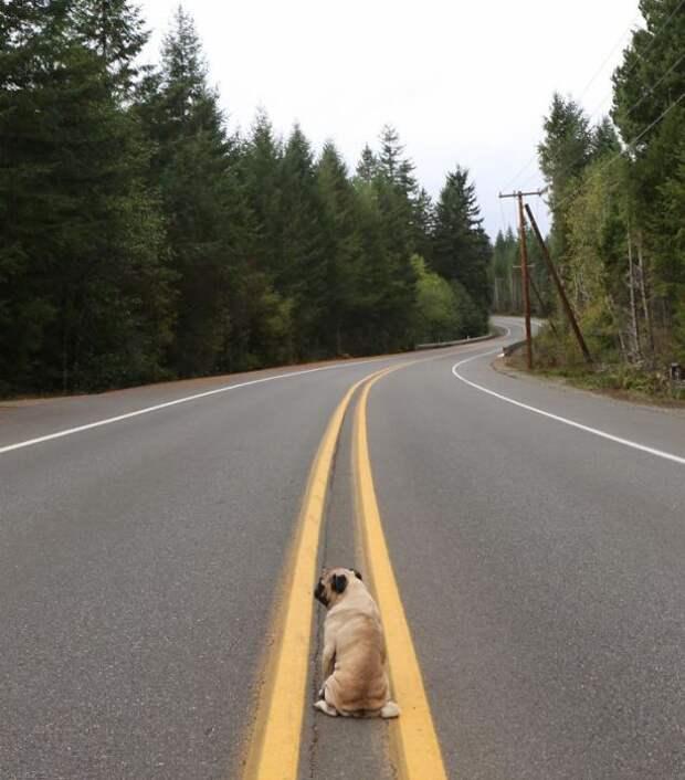 Дальняя дорога манит и манит.