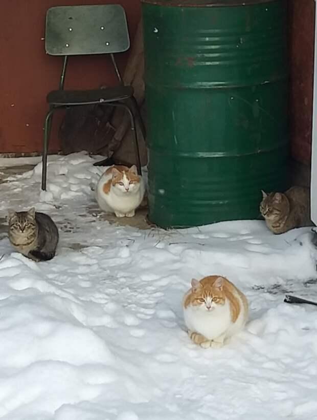 Жизнь продолжается, а они забыты в пустом садоводстве. Пожалуйста, спасите от голода и смерти от лисиц ...