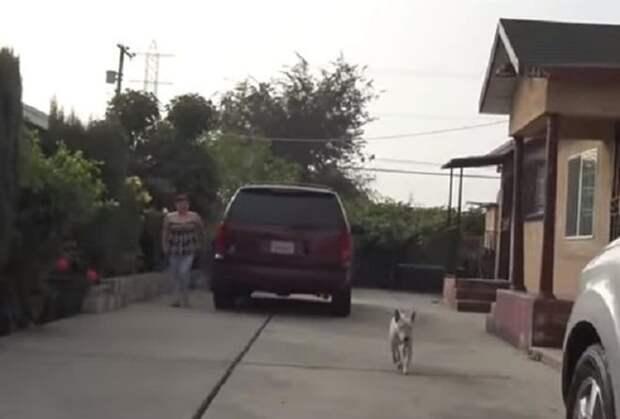 Собака металась по улицам Лос-Анджелеса. Это было странно, ведь у животного имелся чип и хозяева в другом городе