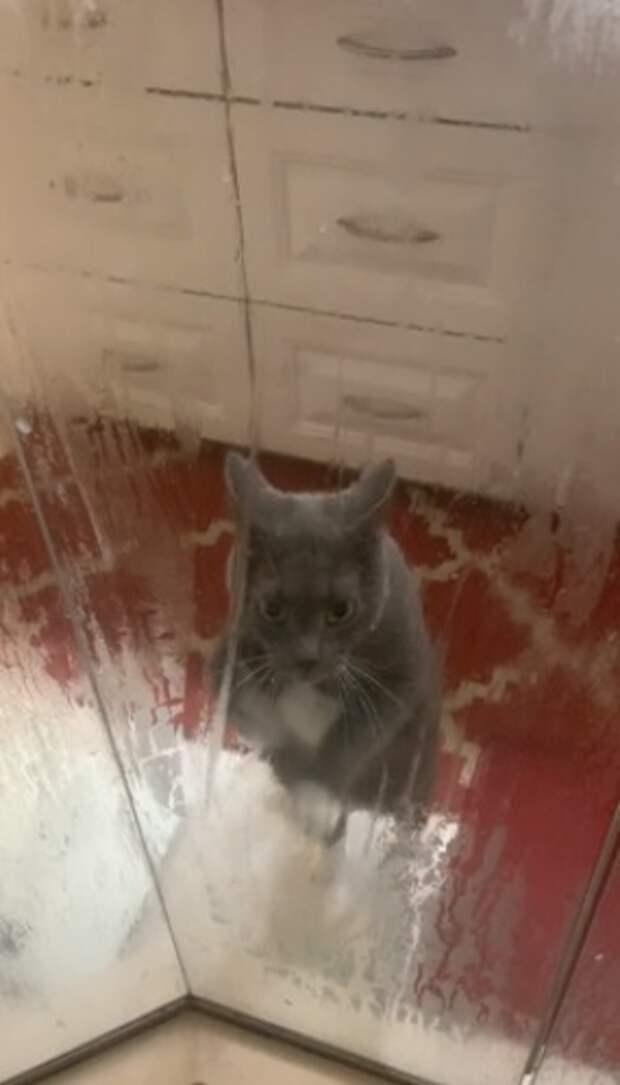 Женщина не понимала, что происходит с ее котом, когда она идет в душ