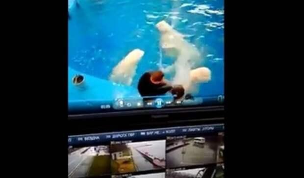 Избиение животных вПриморском океанариуме заинтересовало правоохранительные органы