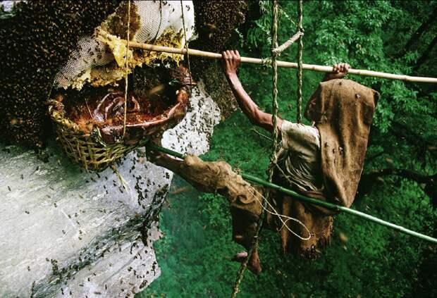 Так собирают мёд в Непале. жизнь, интересные, фото