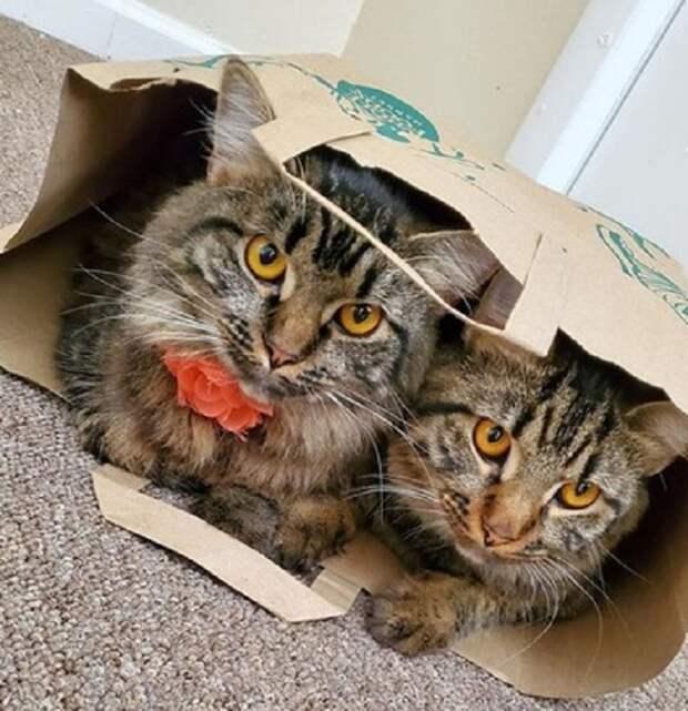 Коты и пакет