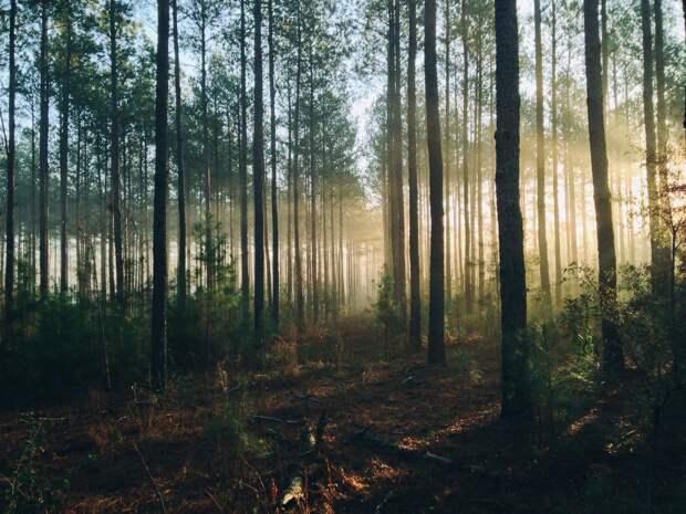 Лес на улице 40 лет Победы в Ижевске сохранит статус городского