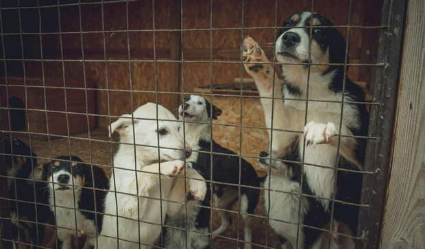 Около 2млн руб потратят власти Волгодонска наотлов животных