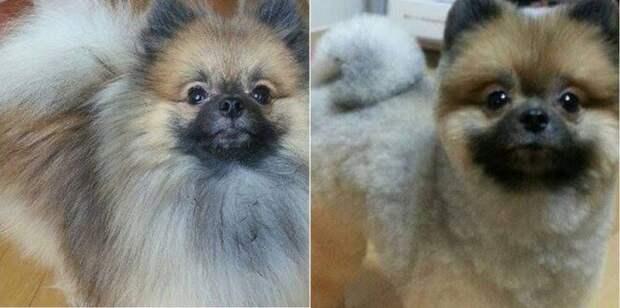 Спасите пса от жары — подстригите его!