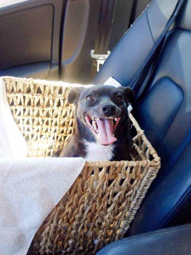 Радостные минуты: 20 снимков счастливых псов, которых забрали из приюта
