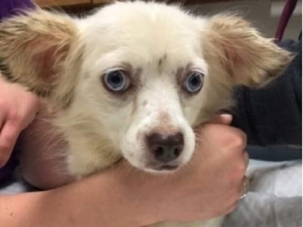 Полиция обнаружила брошенных собак, но люди и не догадывались, что в других городах произошло то же самое