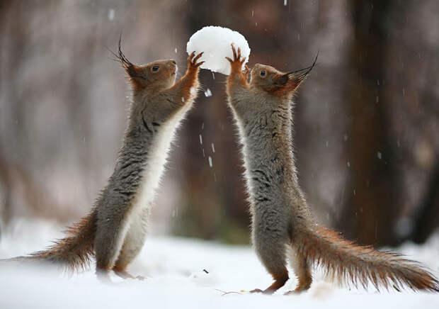 squirrel-photography-russia-vadim-trunov-1