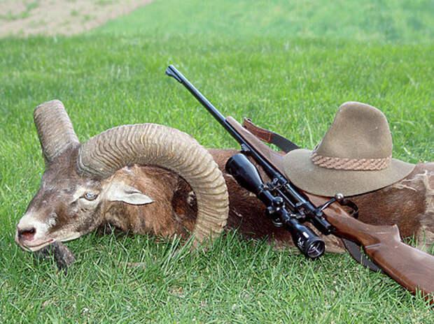 Болтовые винтовки традиционно считаются более точными и используются на охотах, где нужен «длинный» выстрел. ФОТО SHUTTERSTOCK