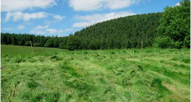 Аромат свежескошенной травы поднимает настроение аромат, здоровье, настроение, растения