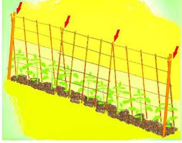 Опора для растений: просто, надежно, удобно