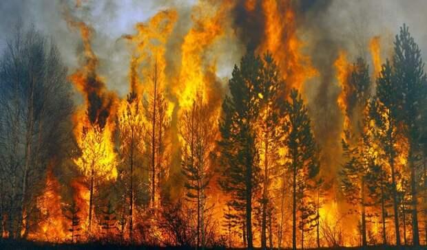 МЧС: В Башкирии зарегистрировано  47 лесных пожаров