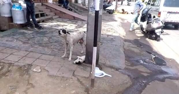 Собака лает