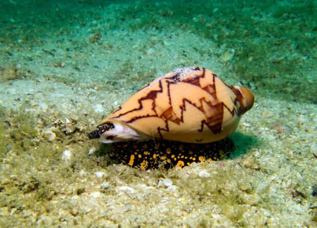 Какие морские животные отличаются причудливым видом?