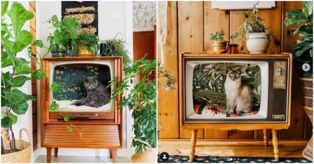 Люди превращают винтажные телевизоры в уютные кровати для кошек