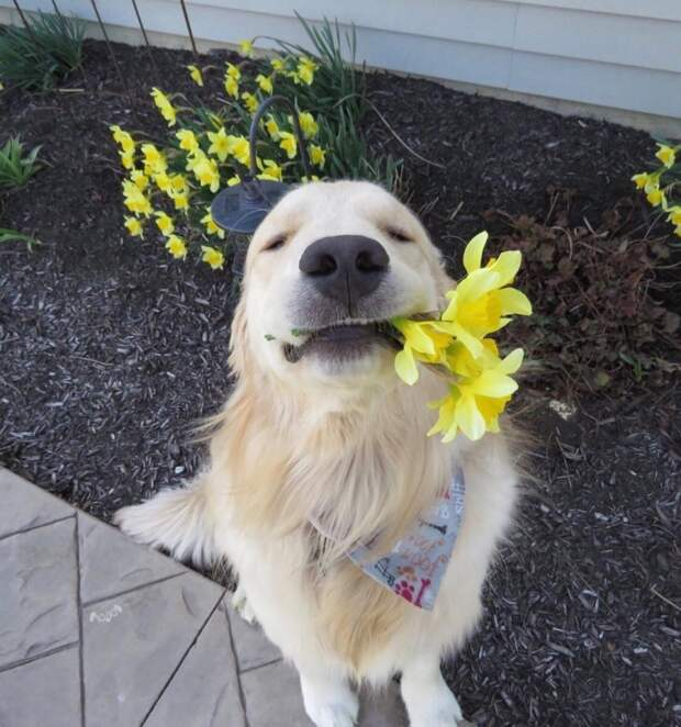 23 смешных снимка песелей, глядя на которых невозможно удержаться от похвалы instagram, подборка, собака, хороший мальчик, щенок, юмор