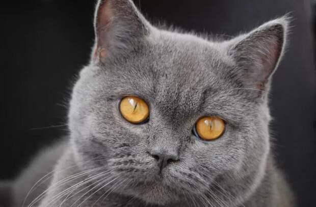 В Японии кошку назначили главой полицейского управления
