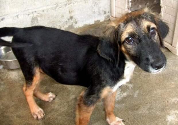 До и после: Сравнительные фотографии спасенных собак
