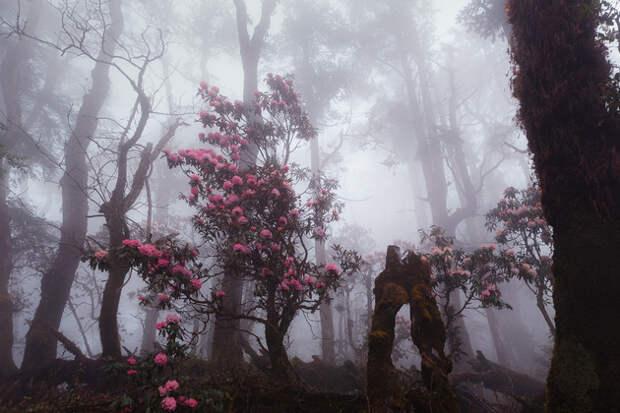 Пробиваясь сквозь лесной туман, открываешь мистическую красоту.