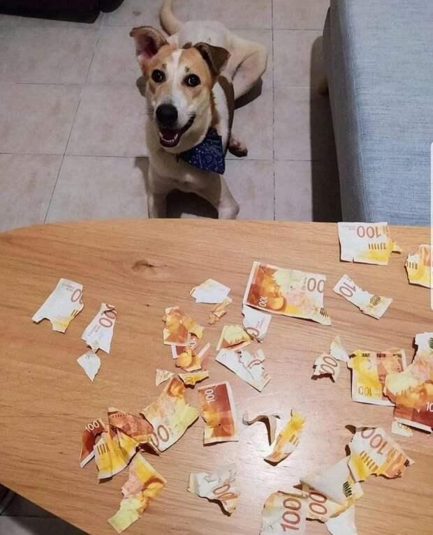 собака и порванные купюры на столе