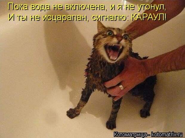 1474017237_kotomatricy-11