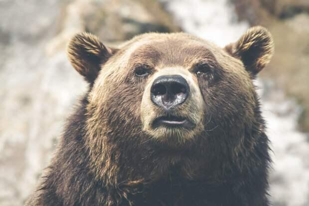 Женщина бросилась на медведя, который обидел ее собак