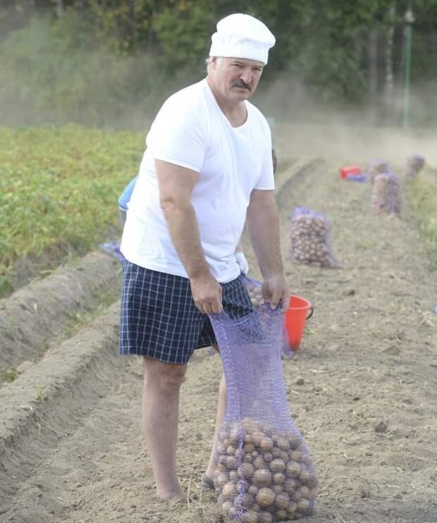 Картофельный бизнес  бизнес, картофель