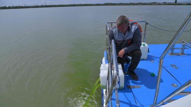 Ростовская АЭС запустила в Дон 400 литров планктонной хлореллы