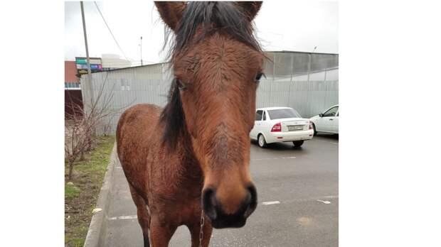 ВСтаврополе провели целую операцию поспасению лошади
