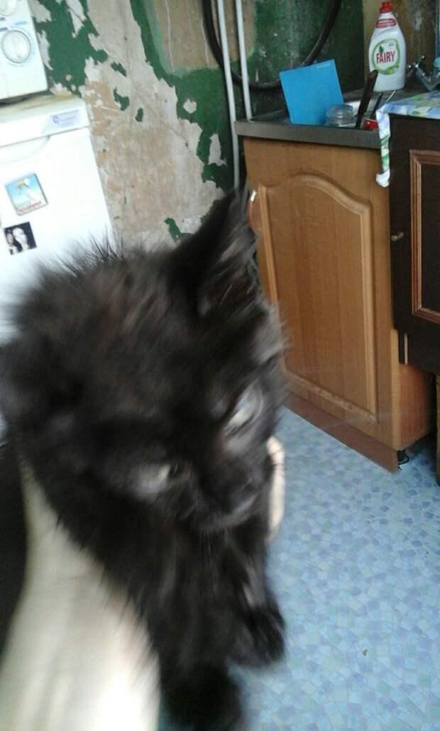 С двумя взрослыми котами бегал котенок...