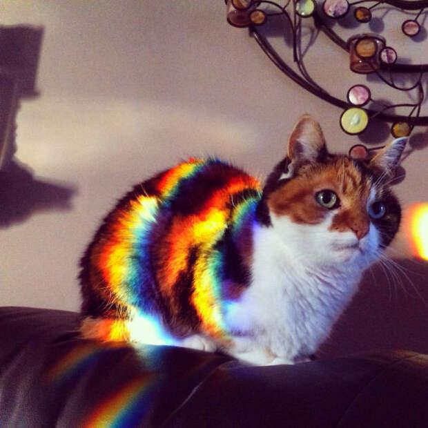 50 котиков, которые больше всего на свете любят погреться на солнце