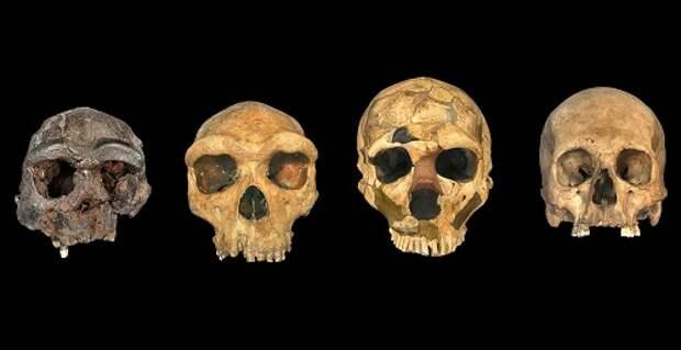 Время и место происхождения Homo sapiens остаются неизвестными несмотря на усилия ученых