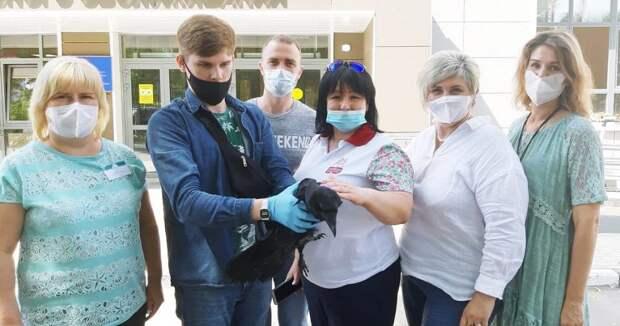 Соцработники из района Некрасовка отбили ворону у стаи собак