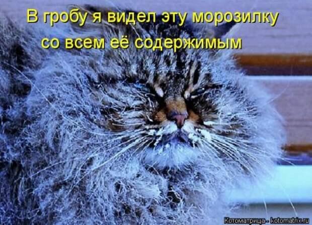 1451492428_kotomatritsa_ii