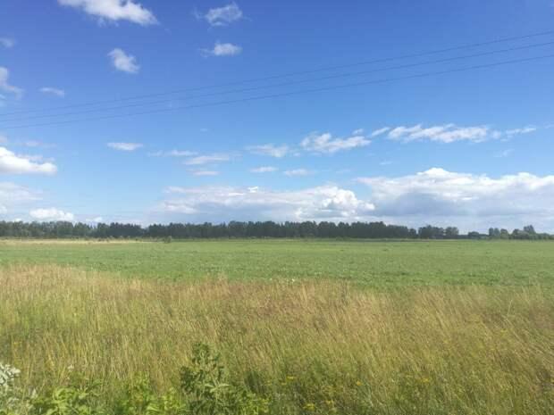 Житель Тверской области украл сено и продал местным жителям