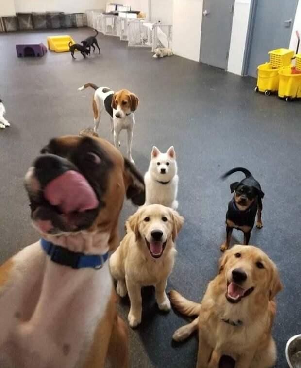 16 смешных фото с животными для отличного настроения!