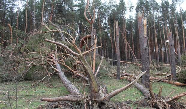 Ураган повредил школу идома всвердловском поселке