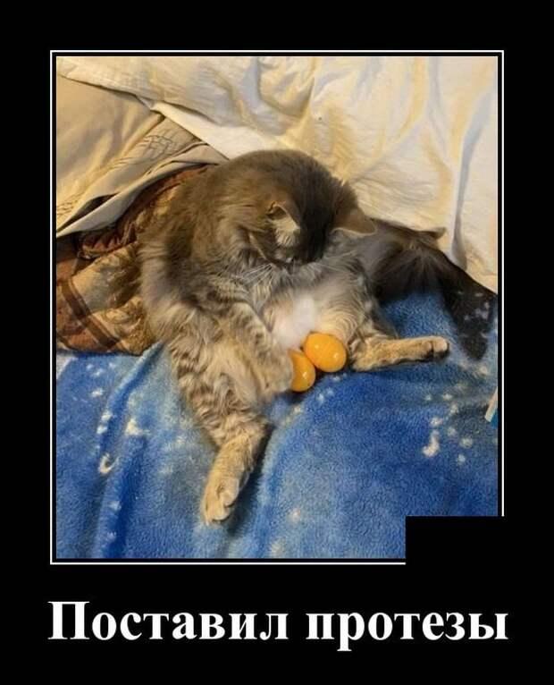 Демотиватор про кота и кастрацию