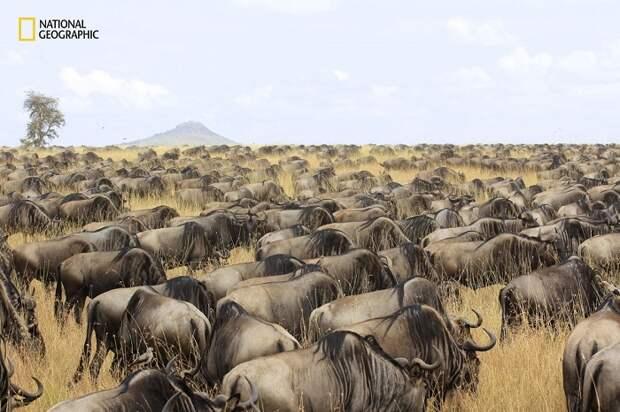 15 незабываемых снимков дикой природы с конкурса National Geographic Nature Photographer of the Year