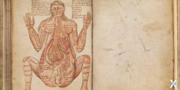 Устройство беременной женщины, Йоханн...