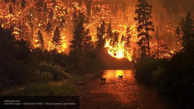 """""""Кровавое"""" небо и лесные пожары: эколог оценил масштаб катастрофы в США"""
