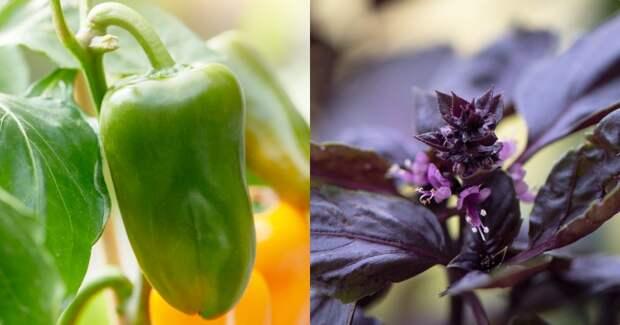 посадка овощей по знакам зодиака