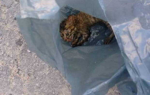Учительница нашла на тротуаре крошечного котенка и вернула его к жизни