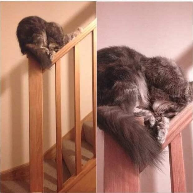 Спать всегда, спать везде: фотки котиков, уснувших в уморительных позах