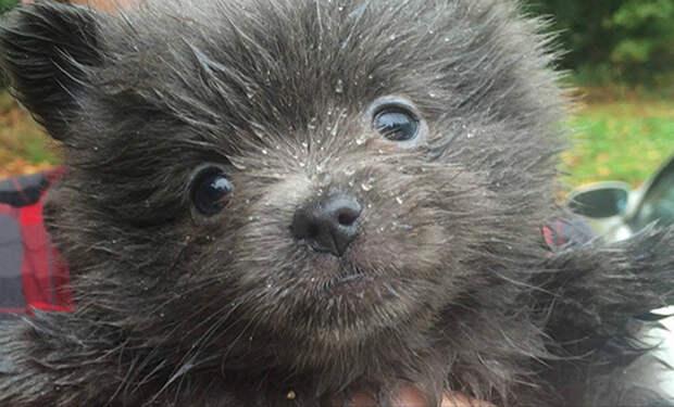 Семья думала, что завела смешную собаку. Но собака стала очень быстро расти и через год оказалась медведем