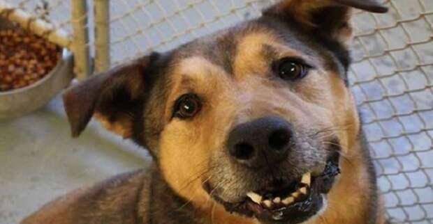2380 дней собаку никто не забирал из приюта. Ее даже хотели усыпить